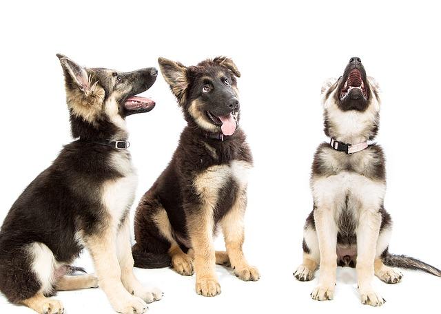 Клички для собак мальчиков и девочек