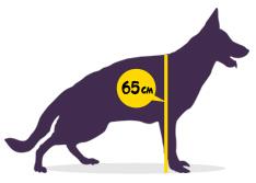 Вольеры для собак в Дедовске