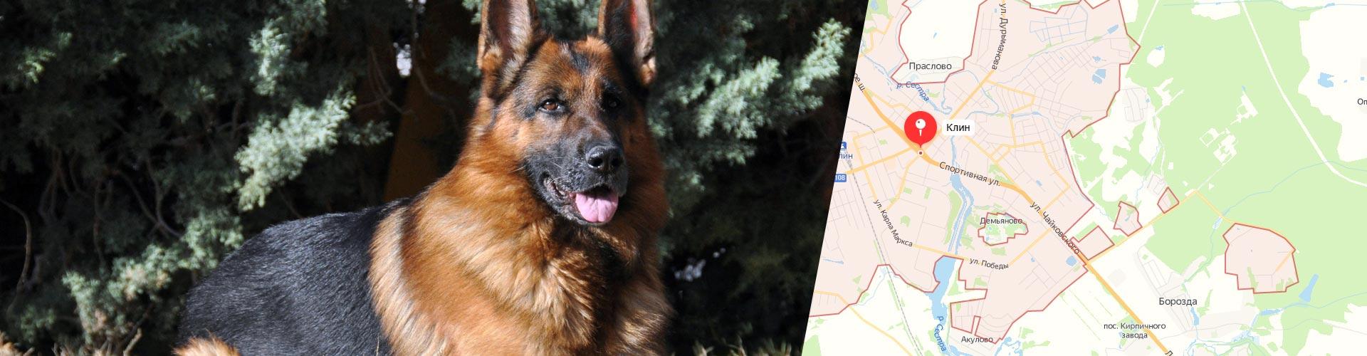 Вольеры для собак г. Клин